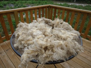 Wool Wash (4)