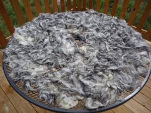 Washed Fleece drying